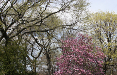 Scene from Central Park
