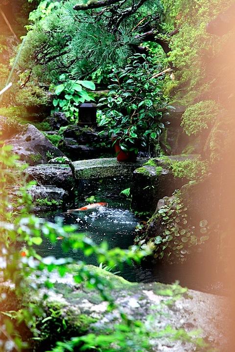 Tea house koi pond