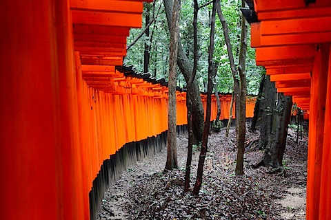 Gates at Fushimi Inari Shrine