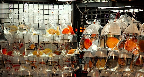 Fish market on Tung Choi Street