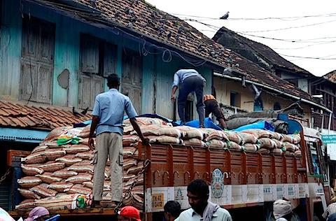 Men moving rice; pigeons watching