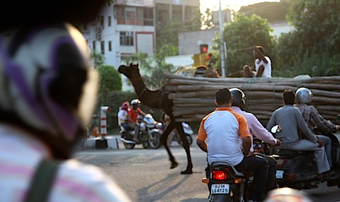 Camel in traffic