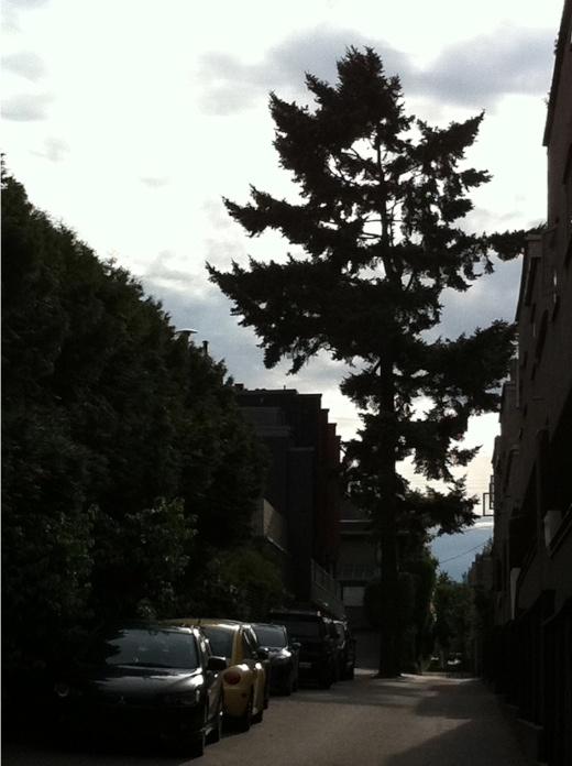 Tree in back alley