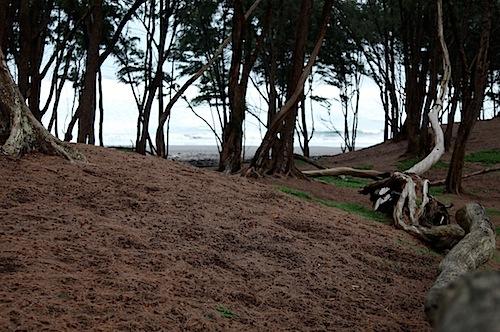 Beach at Pololu Valley