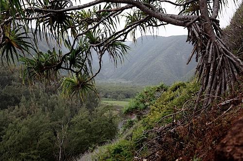 Pololu Valley
