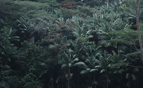 Lush forest at Kolekole Beach Park