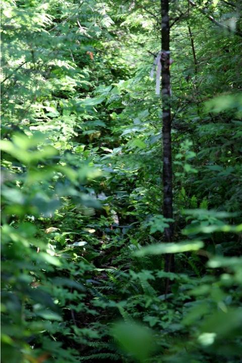 Overgrown Trail near Cheewat Giant