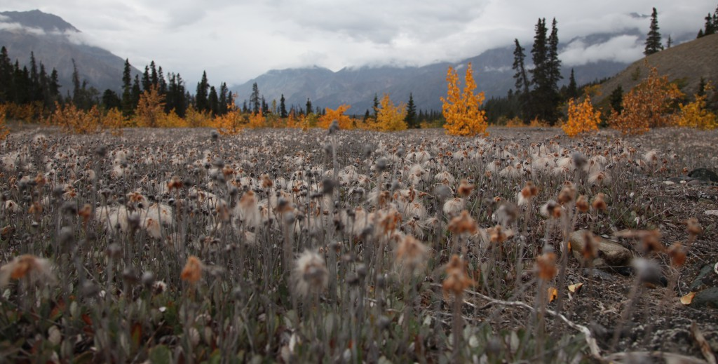 Colors of Kluane